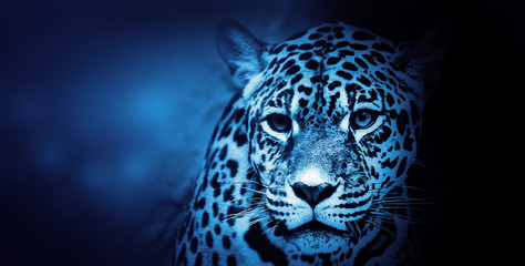 Fototapeta American Jaguar, Illustration