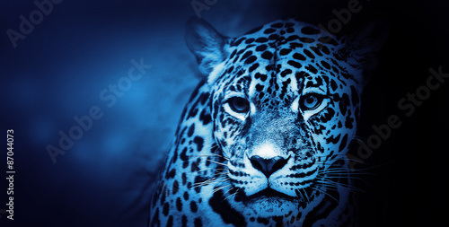 Obrazy na płótnie Canvas American Jaguar, Illustration