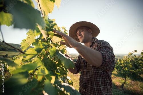 Fotografía  Farmer with hat working  in vineyard