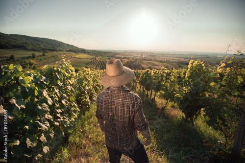 Fotografía  Satisfied farmer with hat standing in his vineyard