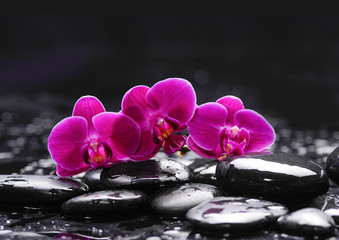 Pink orchid and stones