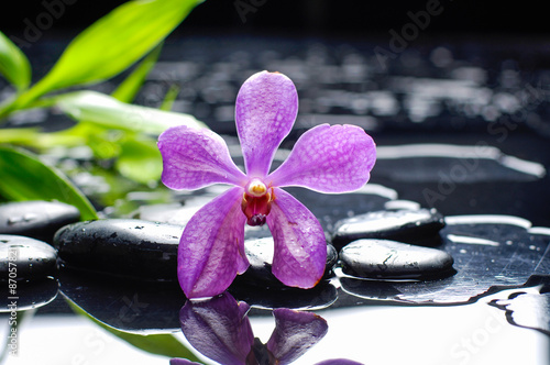 Poster Spa Pink orchid and stones with green leaf background