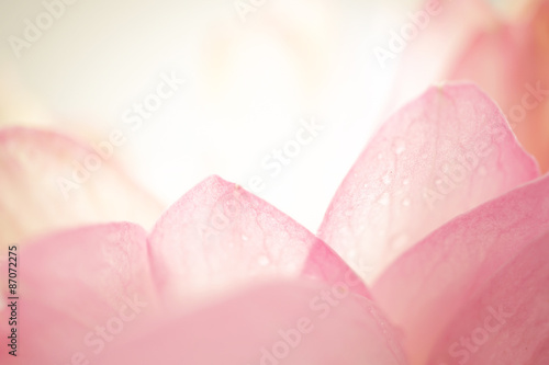 Photo Stands Lotus flower sweet color flower petals in soft color and blur style on mulberry paper texture