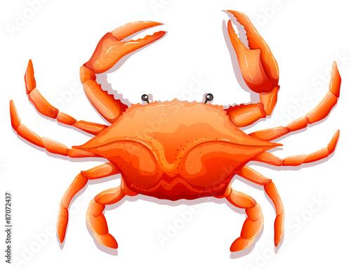 Fresh crab Wallpaper Mural