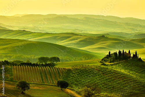 Wall Murals Vineyard Tuscany hills