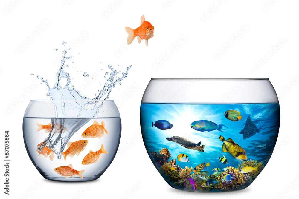 Fisch-Freiheit-Konzept Poster, Plakat | 3+1 GRATIS bei Europosters