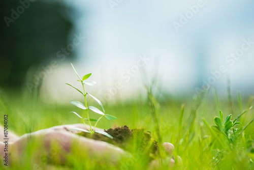 Fotobehang Planten Human is holding a small green plant with soil in hands over the green grass background