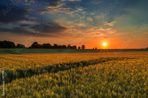 Foto auf Gartenposter Landschappen Sunset over a wheat field