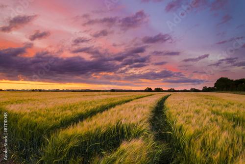 Foto auf Gartenposter Landschappen Sunset over a wheat field