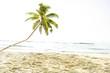 Summer Tropical Island Beach Concept