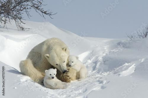 Eisbaerin mit Jungen плакат
