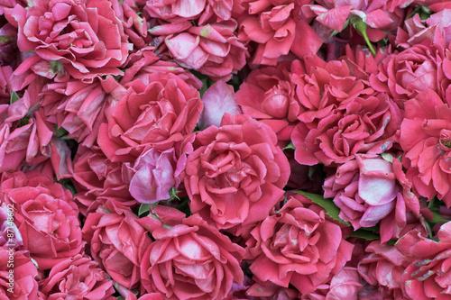 Foto-Tapete - pink roses, vintage style. (von semenycheva)