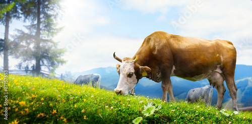 art cow grazing in a mountain meadow