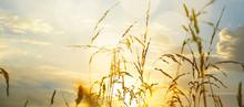 Art Field Of Grass During Sunset