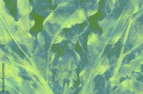 Photo  Fronds in Green