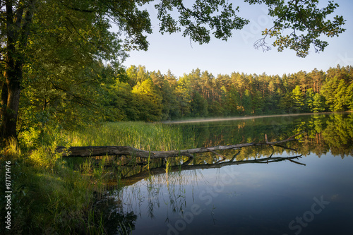 Fotomural Blown down tree in the water. Masuria district, Poland, Europe.