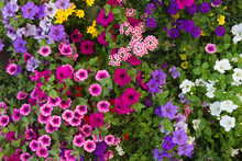 Buntes Blumenbeet Mit Geranien...