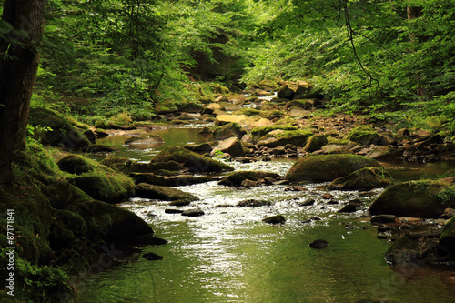 Printed kitchen splashbacks River river in the forest