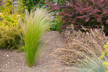 Drought Resistant Plants And G...