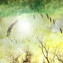 Grunge Sky Background With Birds And Bare Trees