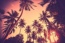 Vintage Toned Palm Tree Silhou...