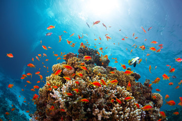 Reef with fishes