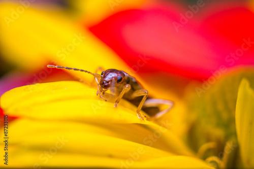 Fotografie, Obraz  Earwig flower