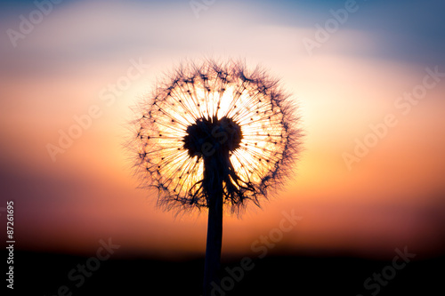 dandelion-flower-with-sunset