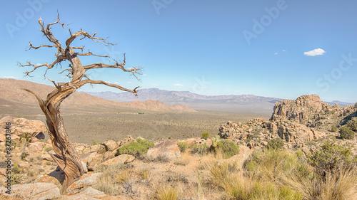 Fotografie, Obraz  Tree Snag, Teutonia Peak Trail, Mojave National Preserve, CA.