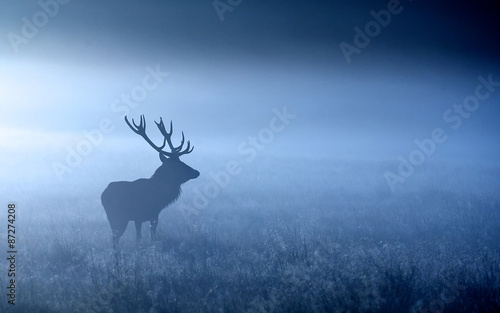 Poster Hert Moonlight. a red deer stag shilloette in the moonlight