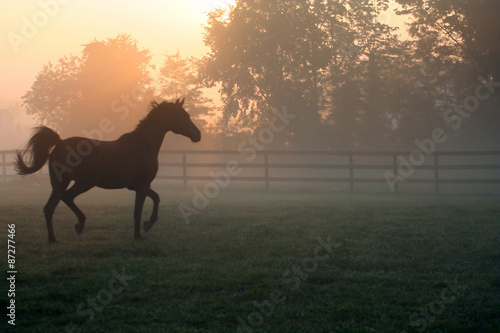 Arabian Horse Trotting in Fog – An Arabian horse trots around his pasture in the morning fog.