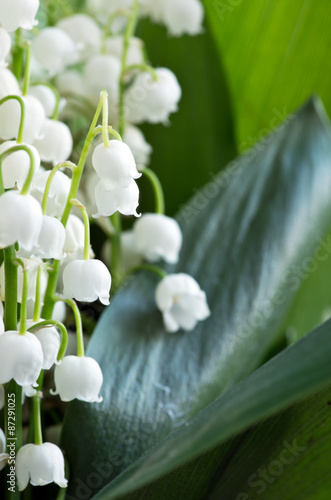 Poster Muguet de mai Close up of Lily of the valley