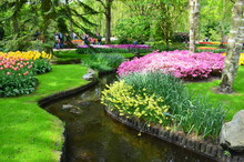 Colorful Flowers And Blossom In Dutch Spring Garden Keukenhof Which Is The World's Largest Flower Garden.