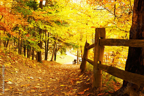 Foto op Canvas Herfst Autumn scene