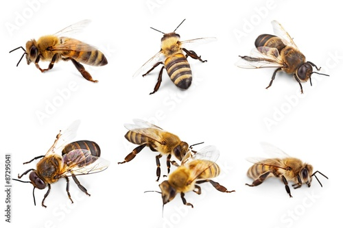 Foto op Canvas Bee Bee, Honey Bee, Insect.