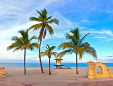 Landscape With Palm Trees On A Beautiful Sunny Summer Afternoon In Hollywood Beach Near Miami Florida With Ocean And Blue Sky In The Background