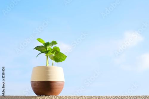 バルコニーに置かれた植物(コーヒーの木) エコイメージ