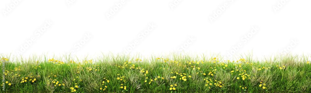 Fototapety, obrazy: grass
