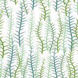 Seaweed on a white background. Seamless pattern of marine plants