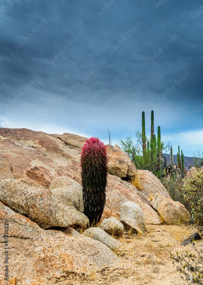 photo art print colorful deseart cactus abposters com