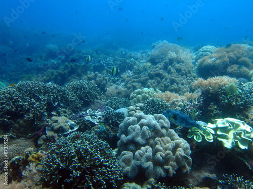 Fotografie, Obraz  Fonds Marins de Island Apo