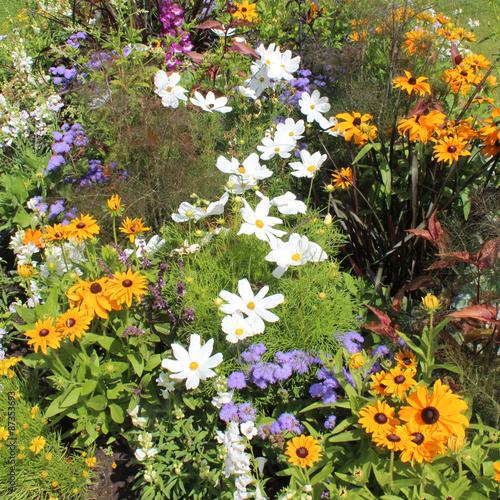 Papiers peints Marguerites Plate-bande de fleurs variées