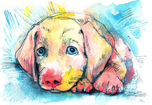 Lying Puppy On A Blue Background, Watercolor Sketch