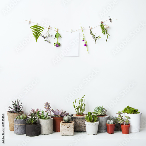 Foto op Canvas Cactus Mock up with hanging flowers and potted cactus and succulents. H