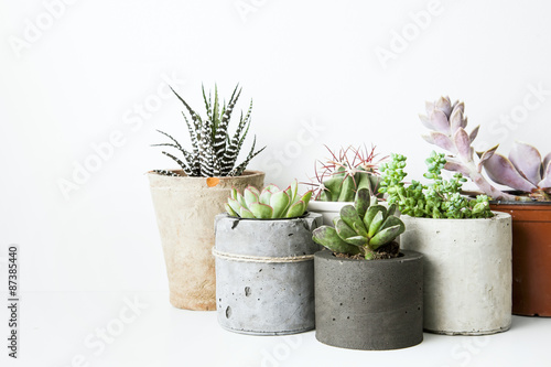 Valokuva  Succulents and cactus in different concrete pots on the white sh