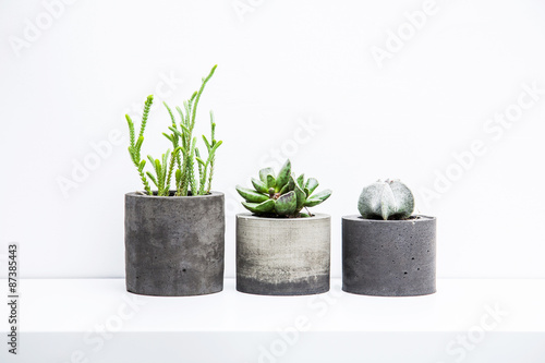 Three succulents or cactus in concrete pots over white backgroun