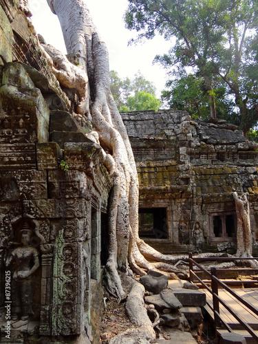 фотография  Angkor Vat et le Ta Prohm envahit par la végétation