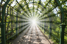Light In The End Of Green Tunnel