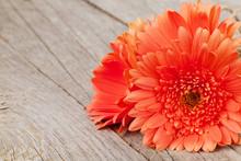 Orange Gerbera Flowers On Wooden Background