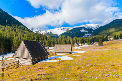In de dag Kamperen Wooden huts on meadow with blooming crocus flowers in Chocholowska valley, Tatra Mountains, Poland